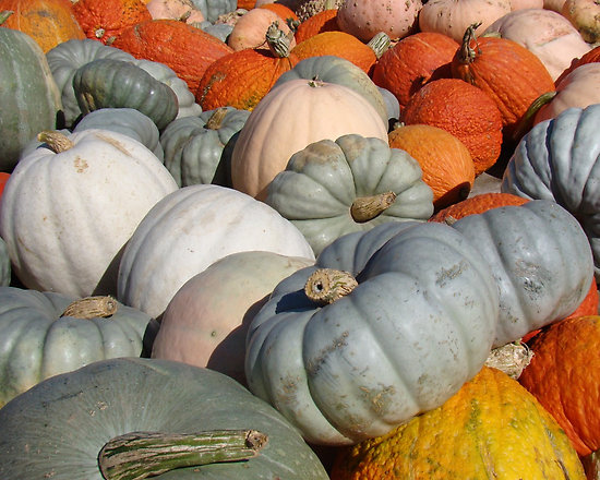 Halloween Fun Fact: While pumpkins are typically orange, they can also be green, white, red and gray.