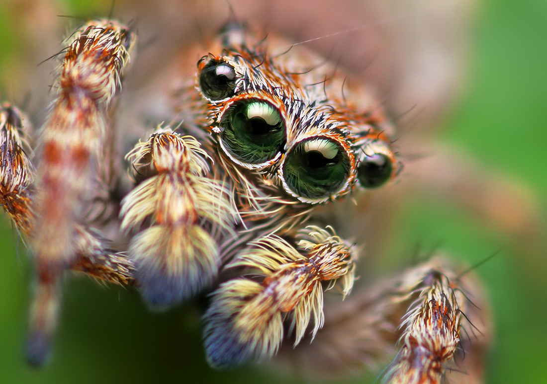 Halloween Fun Facts: According to legend, if you see a spider on Halloween, it's actually the spirit of a loved one watching you.